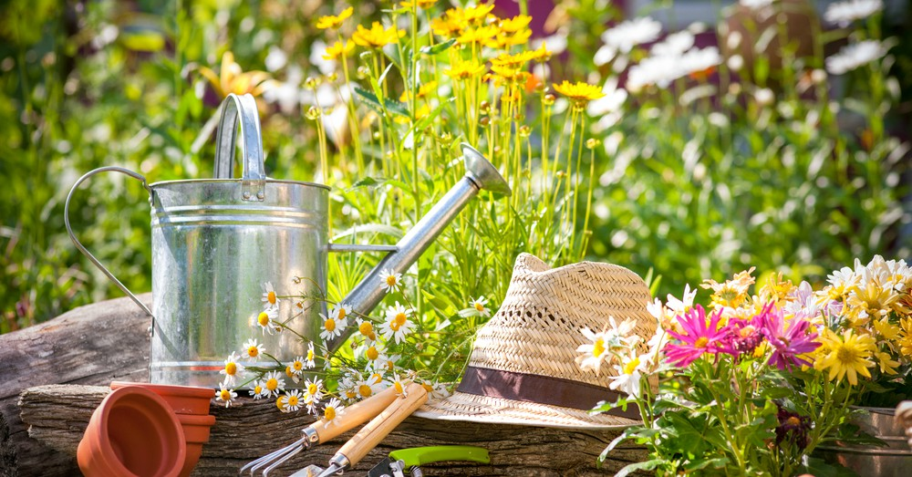 Labores del jardín en julio