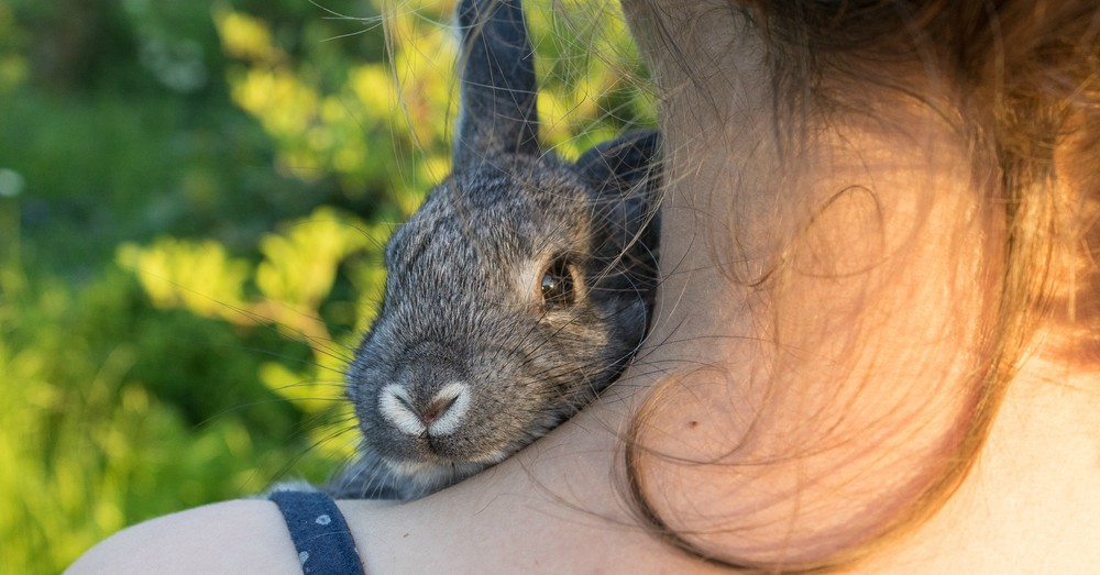 Paseo de conejos y cobayas
