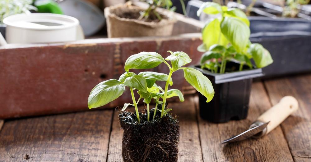 C mo plantar plantas arom ticas blog verdecora for Jardinera plantas aromaticas