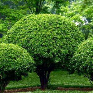 Elegir plantas ornamentales blog verdecora for Arbustos ornamentales