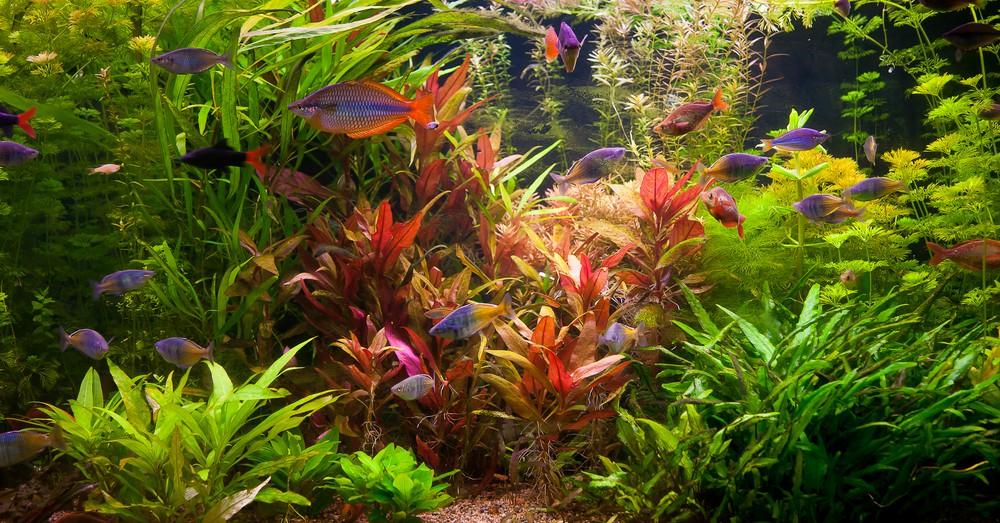 C mo elegir plantas para acuario blog verdecora for Plantas de acuario