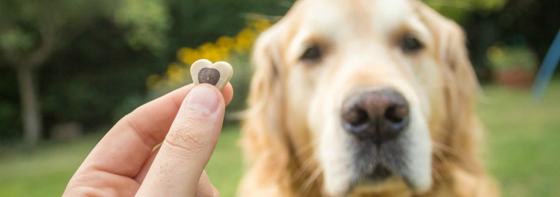 Adiestramiento canino premios para perros verdecora - Verdecora mascotas ...