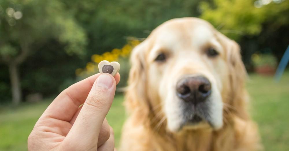 Adiestramiento canino: premios para perro