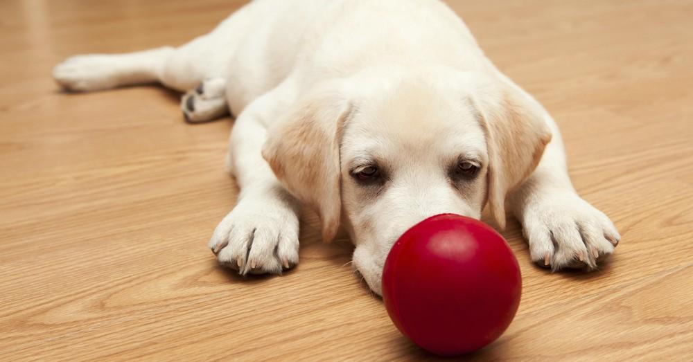 Cómo elegir juguetes para cachorros de perro