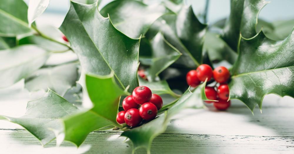 Plantas de Navidad para una decoración natural | Blog Verdecora