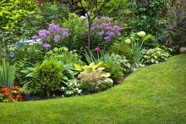 Las mejores plantas para rocalla