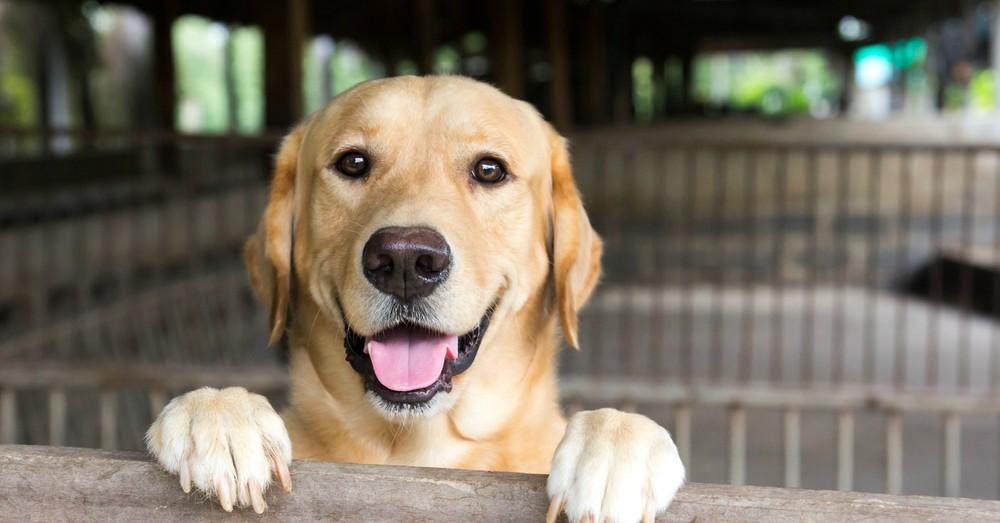Resultado de imagen para perros adopcion