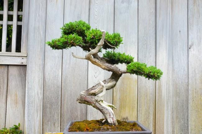 Las 5 mejores plantas para regalar en navidad blog verdecora - Plantas para bonsai ...