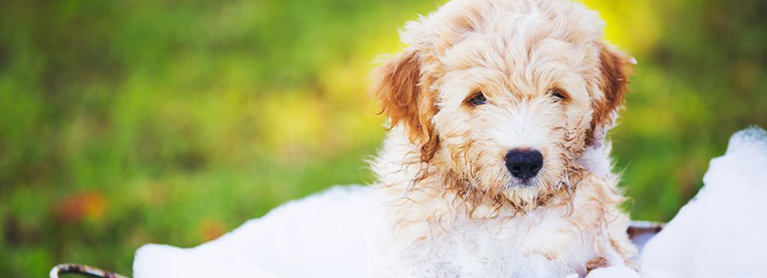 Cada cu nto se ba a un perro blog verdecora - Cada cuanto banar a un perro ...