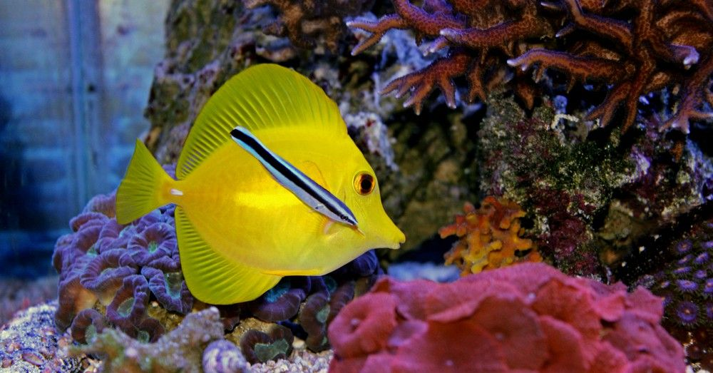 C mo quitar la cal del acuario blog verdecora - Quitar la cal del agua ...