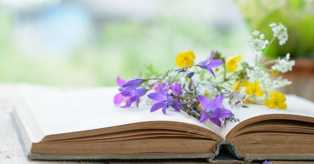 Cómo Secar Flores 5 Técnicas Rápidas Y Sencillas Blog Verdecora