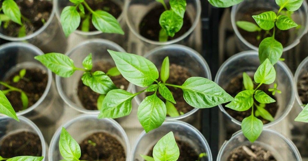 C mo empezar un huerto urbano en semilleros blog verdecora for Que plantas se siembran en un huerto