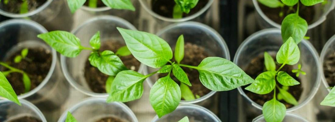 Cómo cultivar un huerto urbano en semilleros