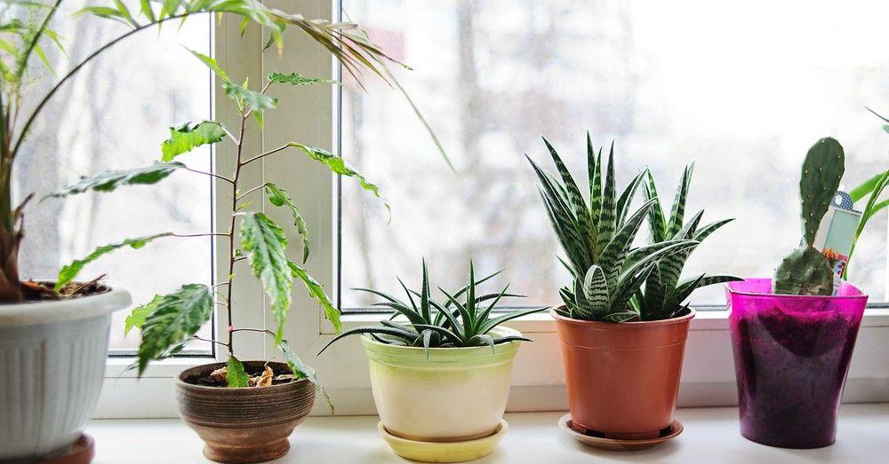 Tipos De Macetas C Mo Elegir La Apropiada Para Tus Plantas
