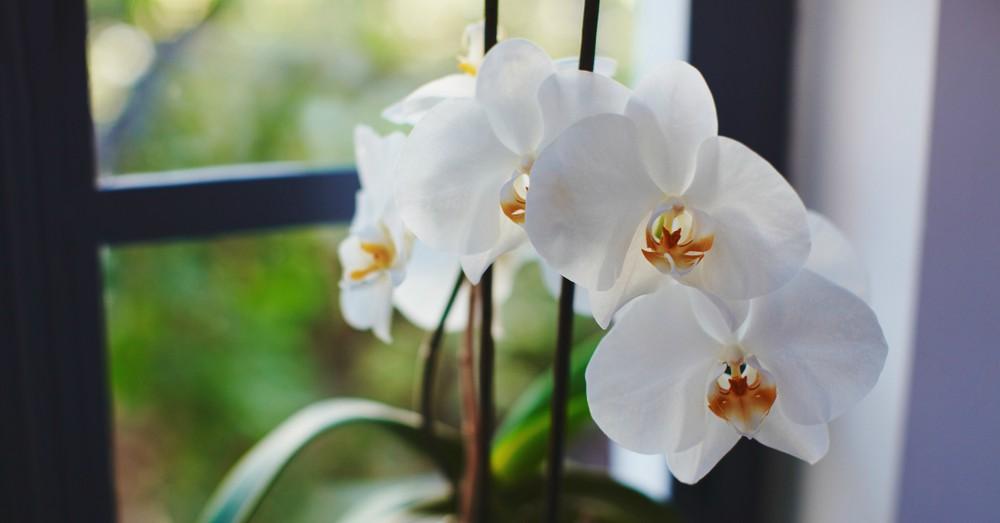c4094bbcd Abono para orquídeas: cómo elegir el correcto | Blog Verdecora