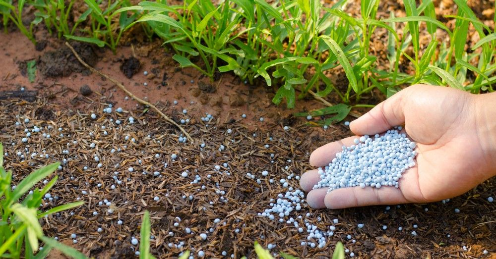Calendario del huerto qu plantar en marzo verdecora blog for Huerto urbano que plantar