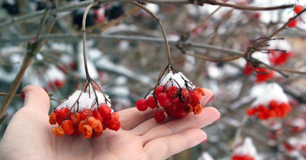 Calendario del huerto: qué plantar en febrero | Blog Verdecora