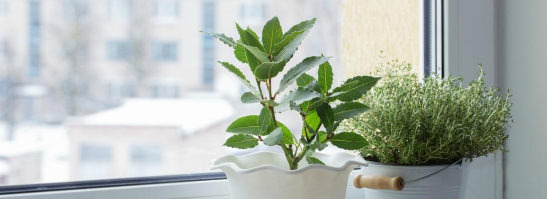 Verdecora Plantas Mascotas Y Todo Para Tu Jard N
