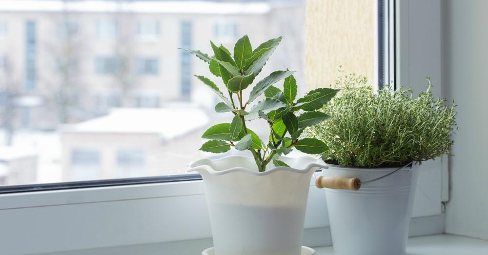 Cuidados de las plantas de interior en invierno blog for Abono para plantas de interior