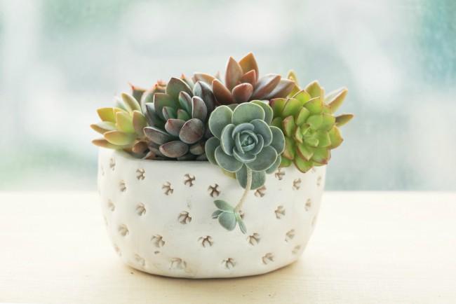 5 plantas suculentas de interior sencillas de cultivar for Decoracion con plantas suculentas