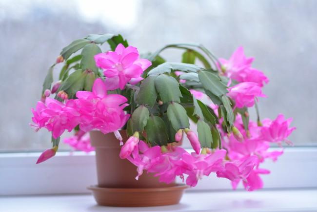 5 Plantas Suculentas De Interior Sencillas De Cultivar Blog Verdecora