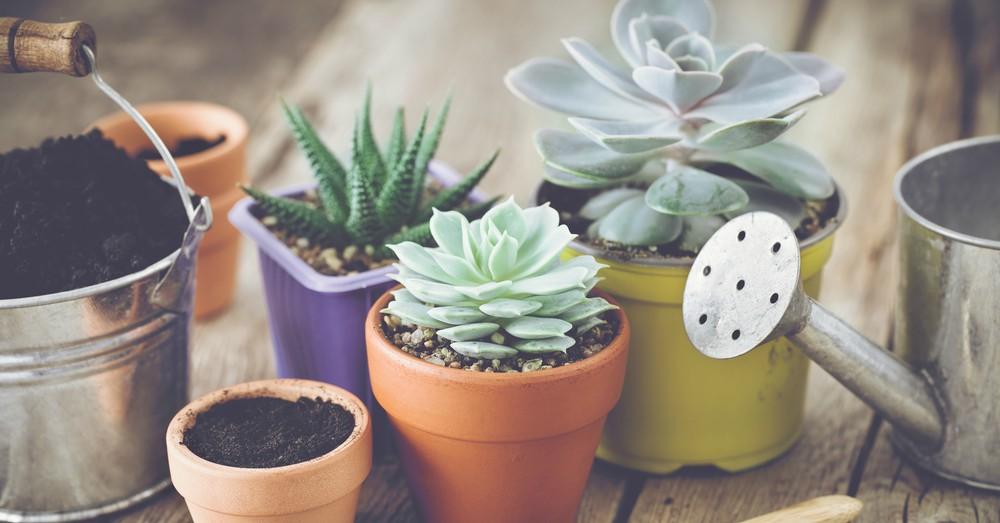 5 plantas para interior que no necesitan grandes cuidados y son - Plantas de interior que no necesitan luz ...