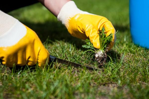 Cómo arrancar las malas hierbas