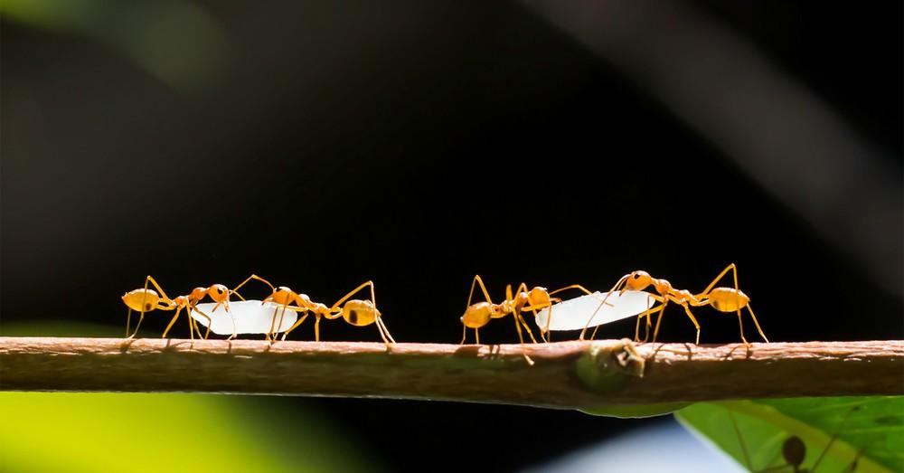 C mo eliminar las plagas del jard n blog verdecora for Como eliminar los mosquitos del jardin