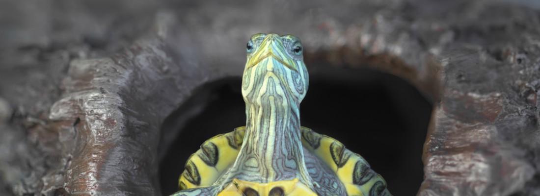 Consejos para tener tortugas en estanque blog verdecora - Estanques para tortugas ...
