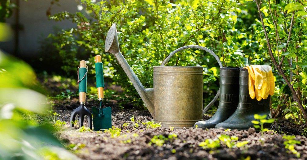 Cuidados de las plantas de jard n en primavera blog for Plantas ornamentales y sus cuidados