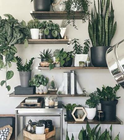 Decoración con plantas suculentas