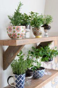 Cómo Decorar Con Plantas La Cocina Blog Verdecora