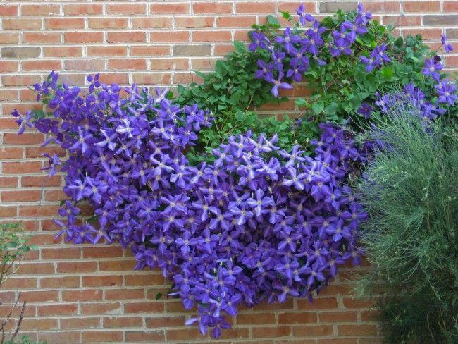 Cinco plantas trepadoras con flor para el jard n blog for Plantas de hojas perennes para jardin