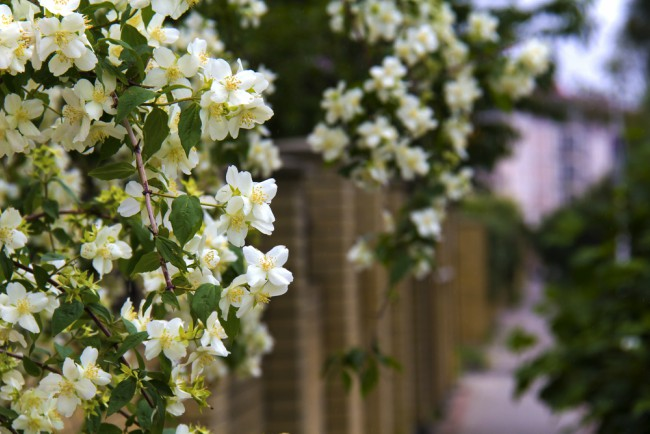 Cinco plantas trepadoras con flor para el jard n blog for Plantas trepadoras para muros
