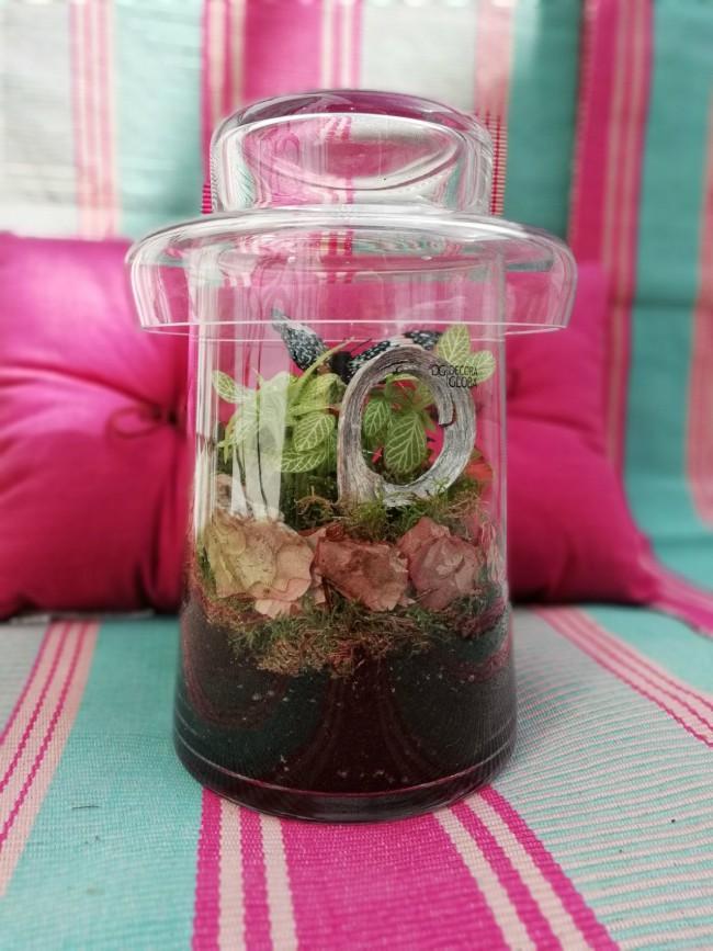 C mo hacer un terrario de plantas en casa diy blog for Verdecora malaga