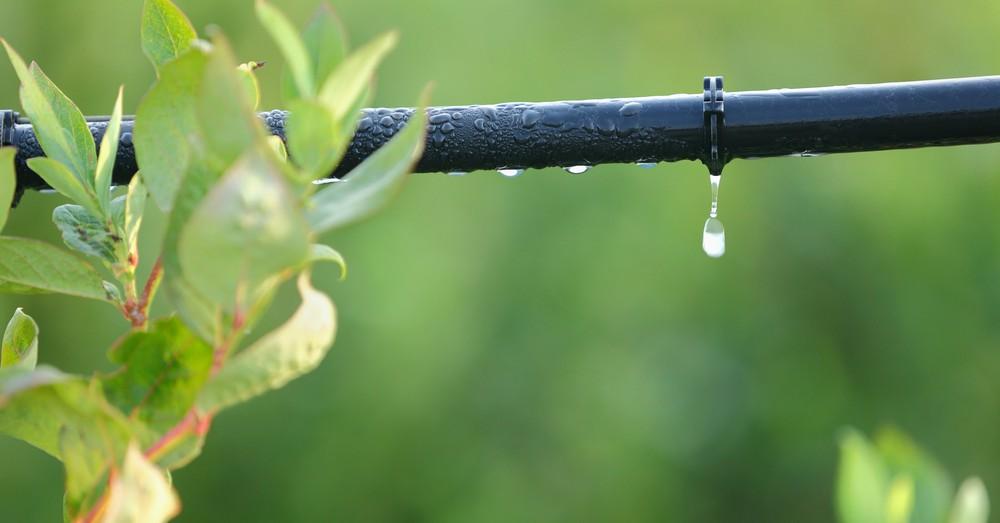 C mo instalar un riego por goteo en el jard n o terraza for Riego por goteo jardin