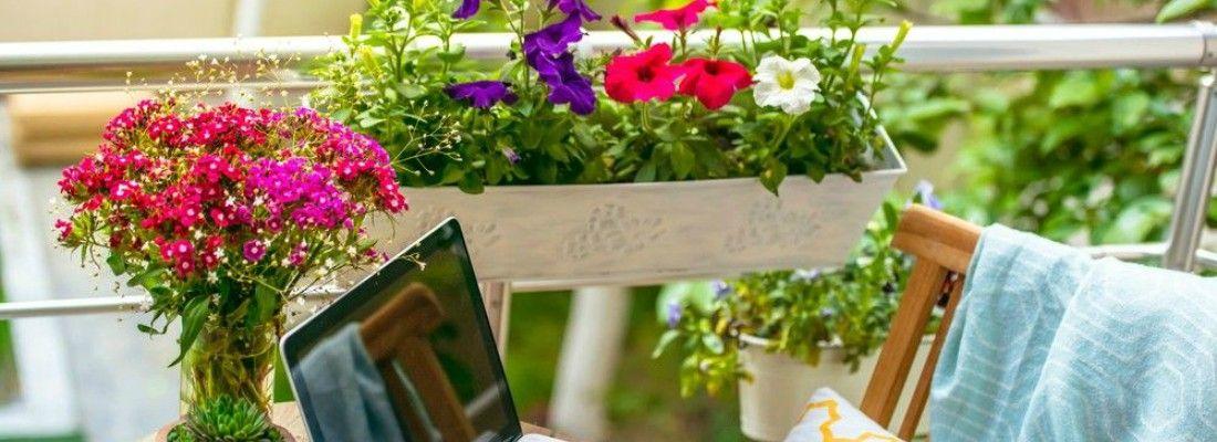 Cinco plantas resistentes para la terraza o balc n blog for Plantas de terraza resistentes