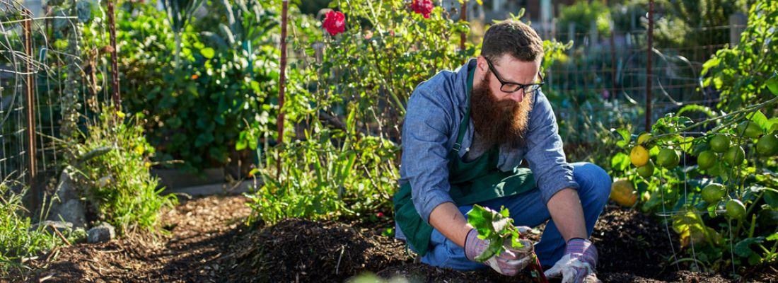 Qué plantar en el huerto en junio