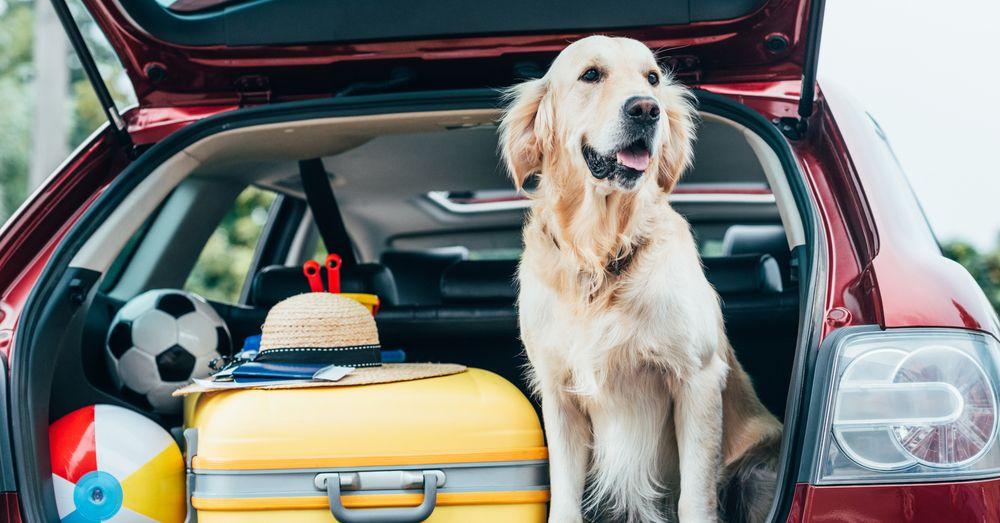 Transporte de mascotas: qué saber según cada animal | Blog Verdecora