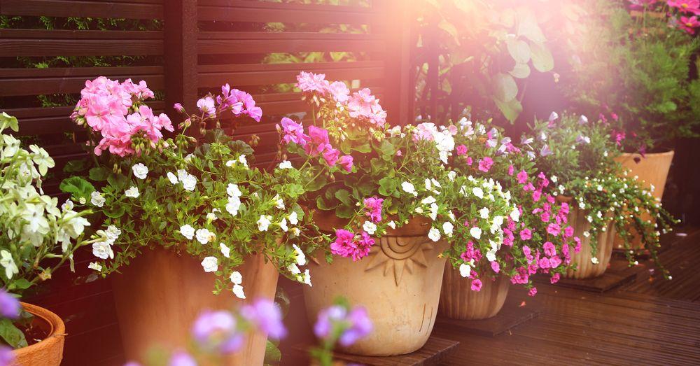 5 Plantas De Verano Para Tener A Pleno Sol Blog Verdecora