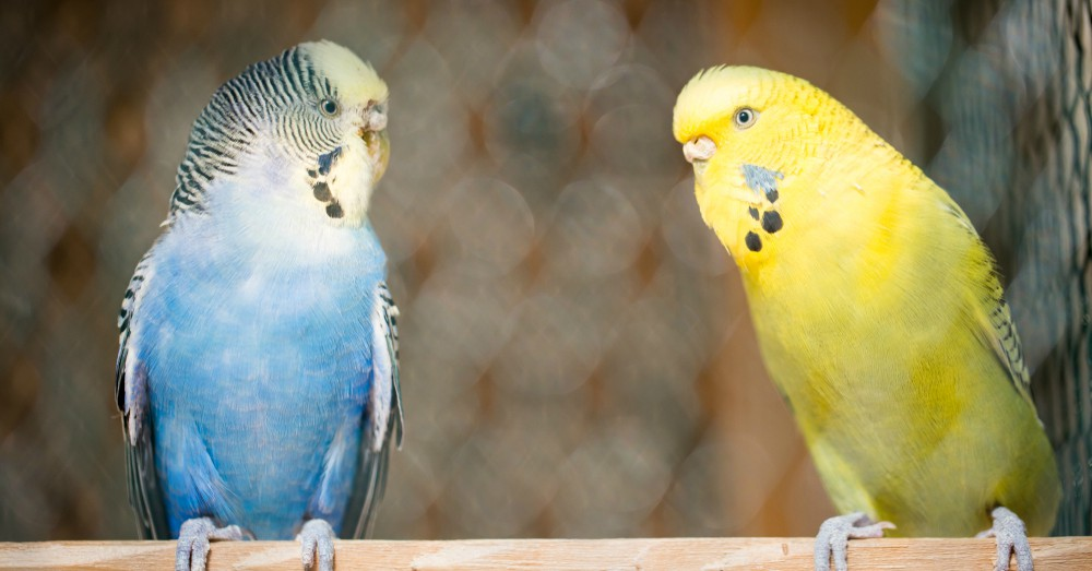 Cuidados de las aves durante las vacaciones