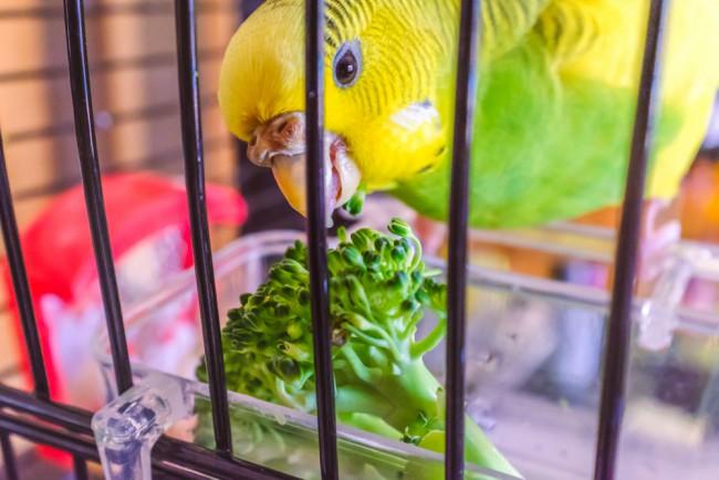 Alimentación fresca, parte de los cuidados de las aves en verano