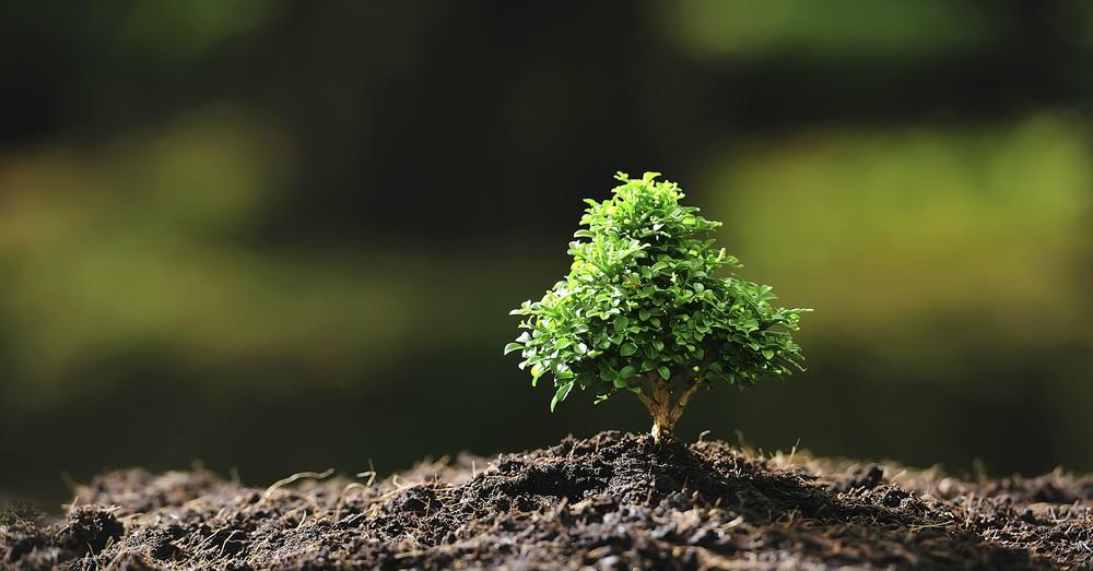 Elegir rboles para jardines peque os blog verdecora for Arboles para jardines pequenos