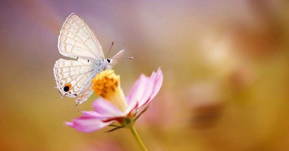 Cómo atraer insectos polinizadores a nuestro jardín