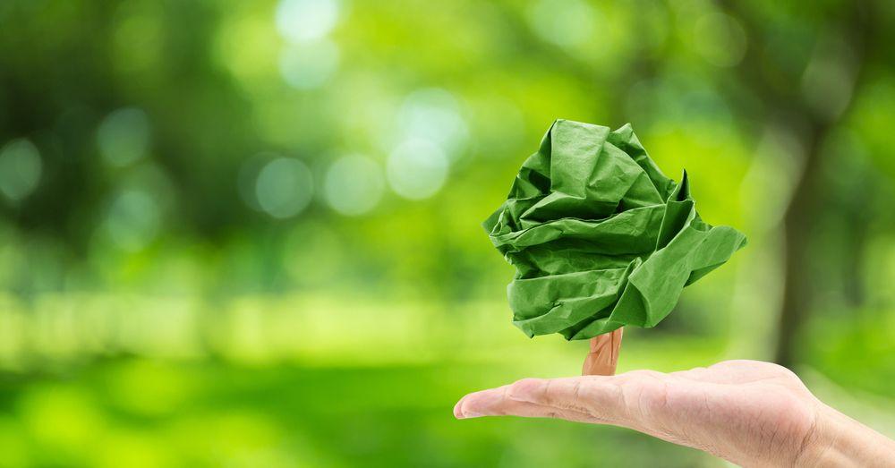 Papel plantable: siembra tus deseos con Verdecora