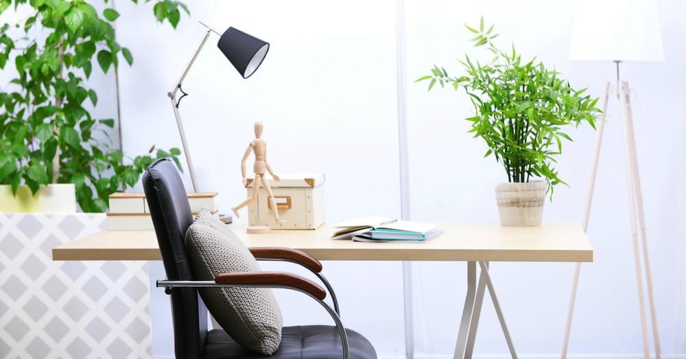 Elegir las mejores plantas para la oficina blog verdecora for Plantas para oficina