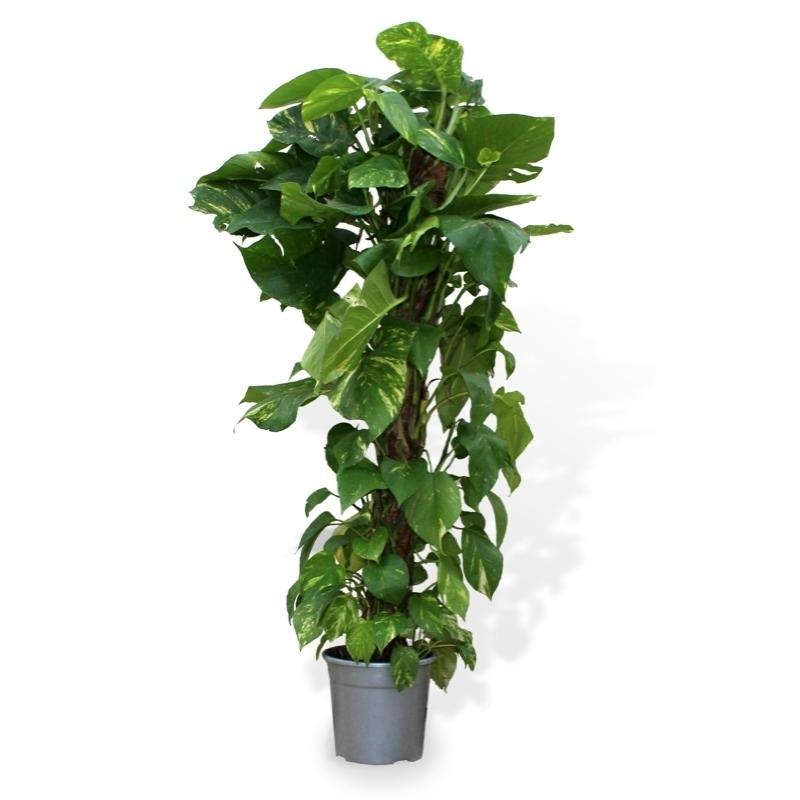 Elegir las mejores plantas para la oficina | Blog Verdecora