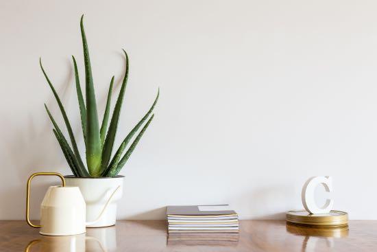 Aloe vera, planta antiestrés
