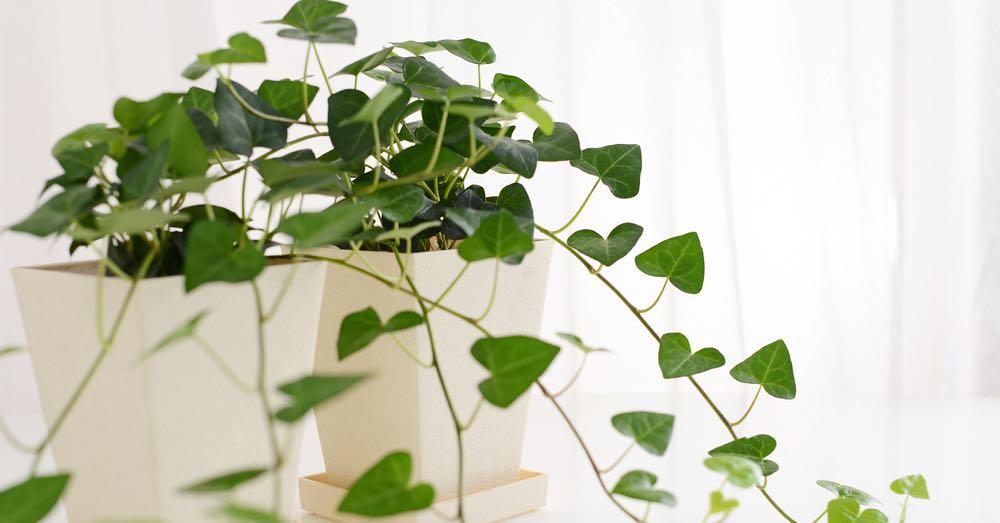 Plantas antiestrés: la naturaleza como aliada