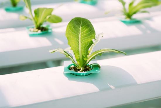 Cultivo hidropónico, uno de los regalos de jardinería más originales